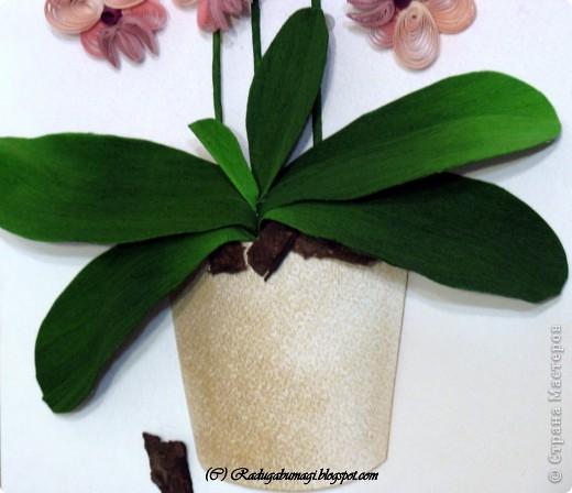 """У меня дома растут орхидеи. Правда, вот уже год они не цветут. Теперь у меня расцвела орхидея из моих любимых полосок!!!  Я получила огромное удовольствие от процесса работы и огромное удовлетворение от полученного результата!!!  Хочу Вам рассказать, как можно """"вырастить"""" у себя дома такой замечательный цветок... фото 12"""