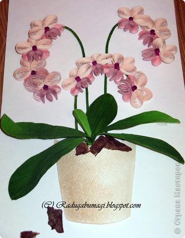"""У меня дома растут орхидеи. Правда, вот уже год они не цветут. Теперь у меня расцвела орхидея из моих любимых полосок!!!  Я получила огромное удовольствие от процесса работы и огромное удовлетворение от полученного результата!!!  Хочу Вам рассказать, как можно """"вырастить"""" у себя дома такой замечательный цветок... фото 15"""