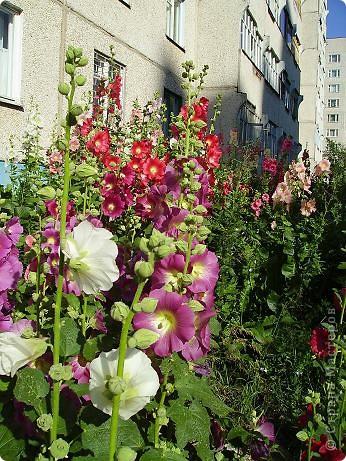 Клумбочное разноцветье фото 7