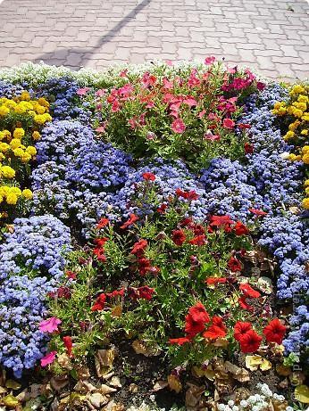 Клумбочное разноцветье фото 1