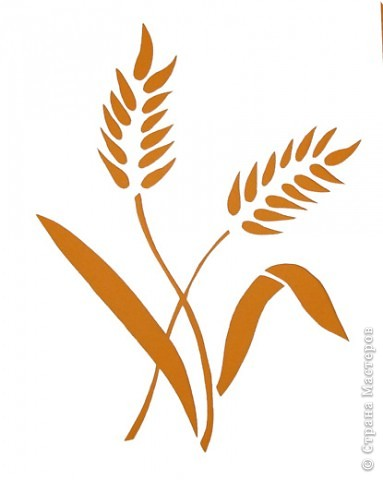 Колосья пшеницы | Страна