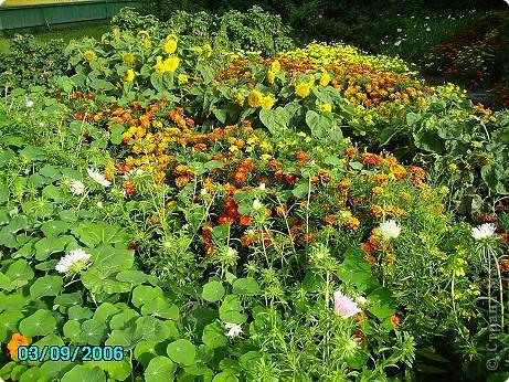 Клумбочное разноцветье фото 13
