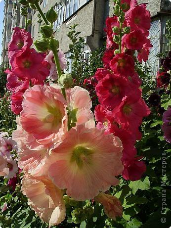 Клумбочное разноцветье фото 8