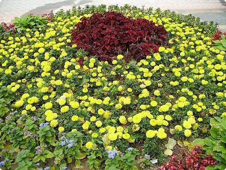 Клумбочное разноцветье фото 6