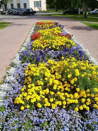 Клумбочное разноцветье фото 15