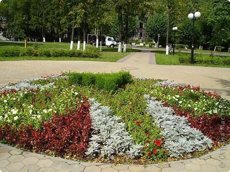 Клумбочное разноцветье фото 5