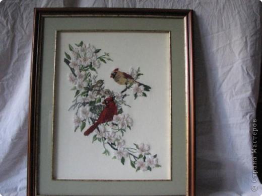 Гибискус и колибри фото 2