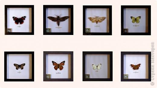 Мини коллекция бабочек.