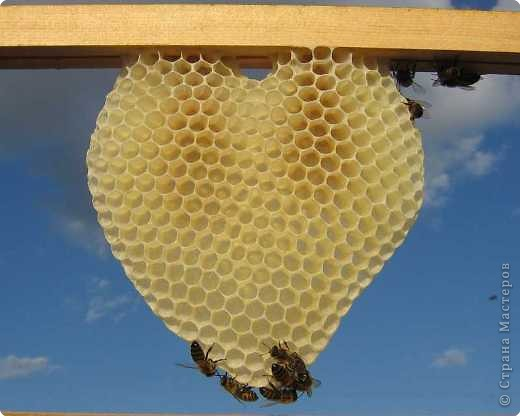 Такую красоту сотворили пчелки.