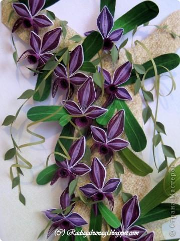 """Мне очень нравятся орхидеи, но, к сожалению, далеко не все виды орхидей могут расти в нашем климате. Я решила сделать себе ещё один подарок, """"вырастив"""" бумажную орхидею.   Небольшая справка: Орхидеи могут расти как в грунте (на земле), так и на деревьях и иногда на скалах. Область распространения орхидей достаточно обширна, но больше всего их встречается именно в жарком, влажном климате, т.е. в тропиках. Дикие тропические орхидеи в основном растут на деревьях (на нижних ветках и стыках веток со стволом дерева).  фото 3"""