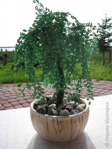 бисероплетение деревья сакура схема
