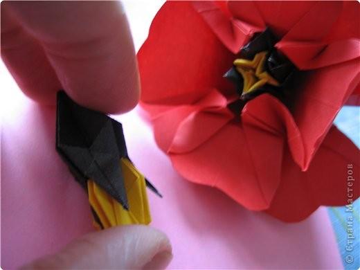 """цветок состоит из 5 элементов. один модуль """"лилия"""" зеленого цвета, бумага размером 10см.  два модуля красного или розового цвета(приближенного к цвету маковых лепестков) размер 9см.  и, серединка. состоит из двух модулей сделанных как модуль""""супер шар"""". один черного цвета (6см) и желтого цвета (5см). для сердцевинки, делаем модули  как для """"супер шара"""", только в укороченном варианте - не разворачивая модуль внутрь. фото 19"""