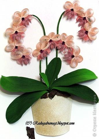 """У меня дома растут орхидеи. Правда, вот уже год они не цветут. Теперь у меня расцвела орхидея из моих любимых полосок!!!  Я получила огромное удовольствие от процесса работы и огромное удовлетворение от полученного результата!!!  Хочу Вам рассказать, как можно """"вырастить"""" у себя дома такой замечательный цветок... фото 1"""