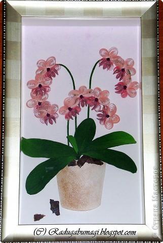 """У меня дома растут орхидеи. Правда, вот уже год они не цветут. Теперь у меня расцвела орхидея из моих любимых полосок!!!  Я получила огромное удовольствие от процесса работы и огромное удовлетворение от полученного результата!!!  Хочу Вам рассказать, как можно """"вырастить"""" у себя дома такой замечательный цветок... фото 14"""