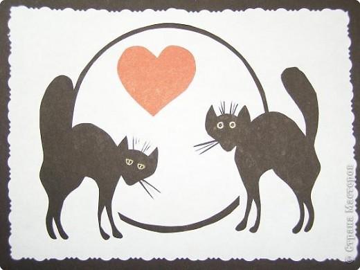 Коты и кошки 3 фото 1
