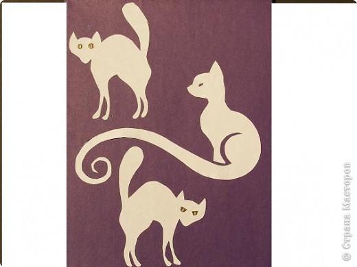 Коты и кошки 3 фото 5