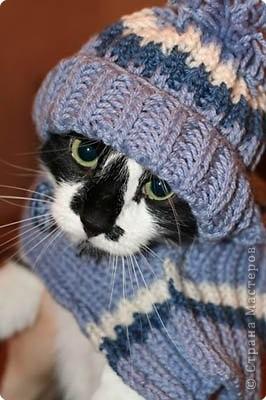 Очень хочу похвастаться своим первым опытом в изготовлении нарядов для своих любимых котов. Вязанием никогда не занималась. Но изготовление этих шапок прошло на ура, очень быстро и с огромным удовольствием. Самое смешное что было - это сам процесс фотосъёмки. Когда на своих любимцев я одевала шапку - их просто парализовало. Насмеялись всей семьёй. Красота, как говорится, страшная сила!!!  Это Марсик! Один из двух самых любимых котов в мире фото 1