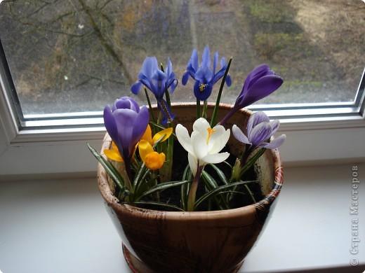 Очень хочется весны! фото 1