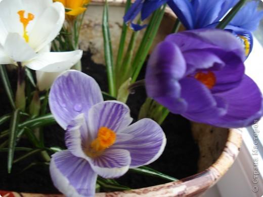 Очень хочется весны! фото 2
