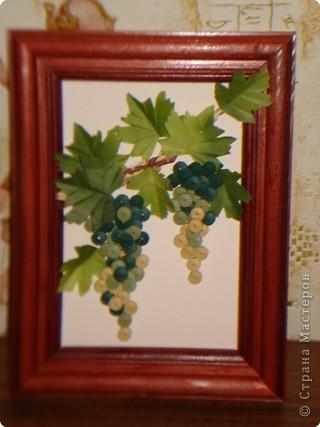 Виноград фото 1