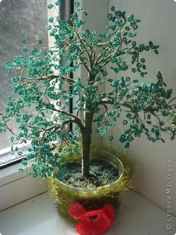 новое дерево