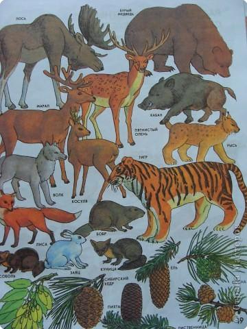 Пока ребенок маленький он живет в мире сказок, где комары и мухи, медведи и лягушки мирно живут в одном теремке. Художники рисуют животных , иногда специально не соблюдая истинных размеров животных. Дети рисуют на стандартном листе, лепят из комочка глины, который умещается в кулачке. Вот и случается, что гриб и елочка могут быть одной высоты.   фото 11