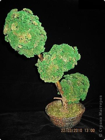 Вот такое дерево у меня получилось фото 17