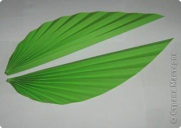Мастер-класс Бумагопластика Гофрированные листья Бумага фото 1