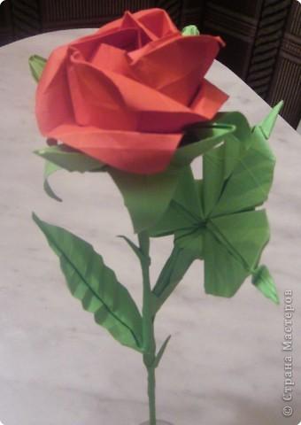 Оригами Роза кавасаки Бумага