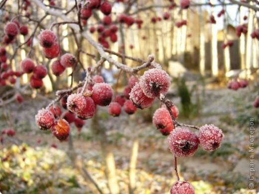Начало зимы всегда радостно и красиво! фото 10