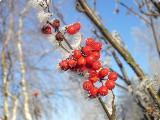 Начало зимы всегда радостно и красиво! фото 7