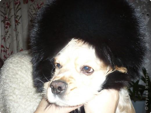Знакомьтесь, это Я. Вот такая у меня шапочка. фото 2