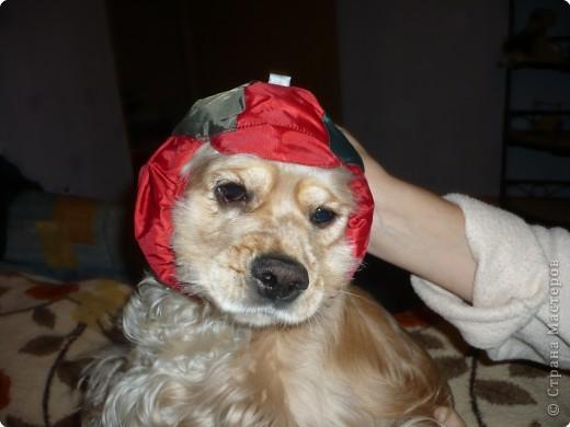 Знакомьтесь, это Я. Вот такая у меня шапочка. фото 1