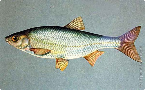 Помогите собрать рыбу фото 1