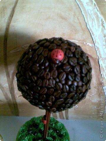 У свекрови был юбилей! Она очень большая любительница кофе. И насмотревшись на все чудесные кофейные деревья Страны решила и я удивить свекровь. Цель достигнута-она в восторге. фото 3
