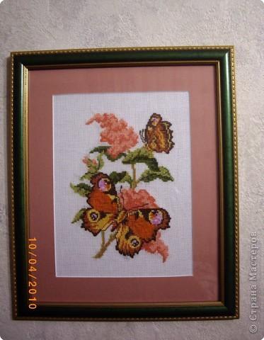 """Бабочки """"Павлиний глаз"""" Что-то бабочку кольнуло,  Но об этом мы потом, Постели соломку злую Нам зимой случится дом. фото 2"""