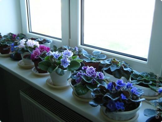 Фиалки в домашних условиях уход и размножение в домашних условиях