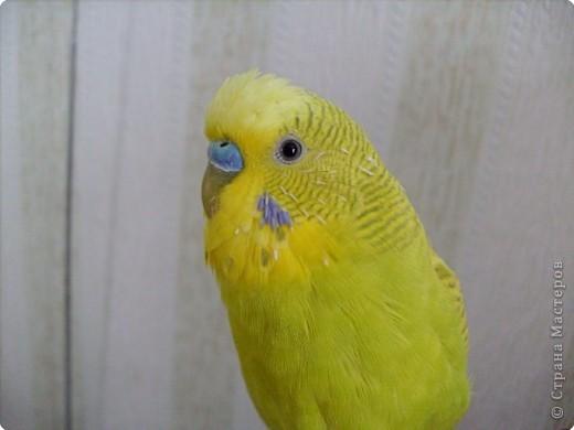 Мой любимка - самый главный член семьи - Роман. фото 1