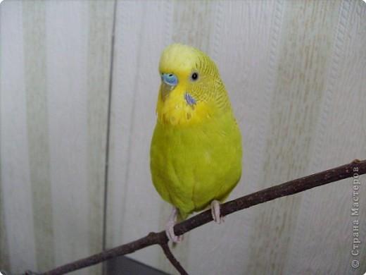 Мой любимка - самый главный член семьи - Роман. фото 2