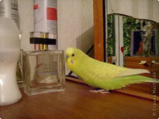 Мой любимка - самый главный член семьи - Роман. фото 4