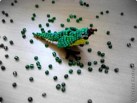 попугай Бисер фото 1