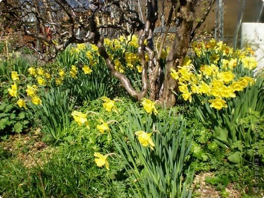 - Не определена -: Весна 2010 фото 3
