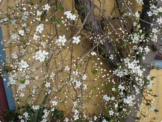 - Не определена -: Весна 2010 фото 2