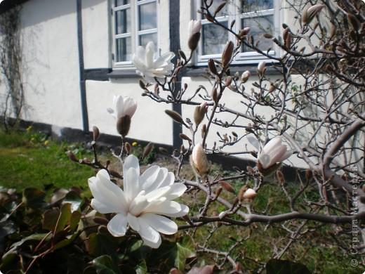- Не определена -: Весна 2010 фото 7