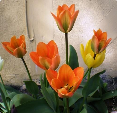 - Не определена -: Весна 2010 фото 6