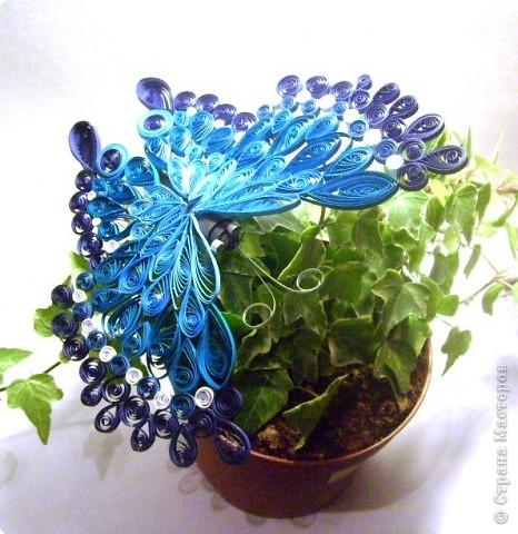 Квиллинг: Бабочка фото 1