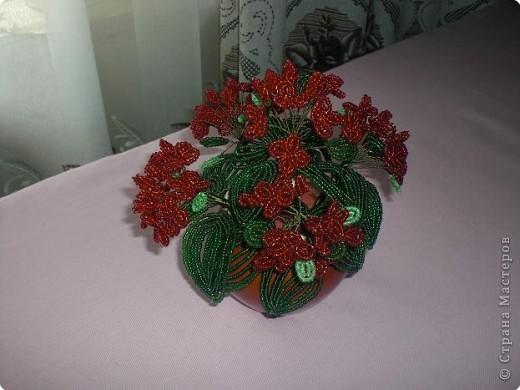 Герань. Подарок маме. фото 1