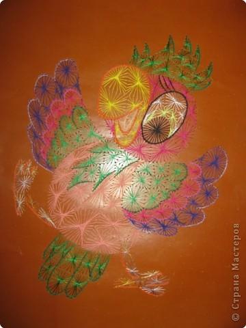 Попугай Кеша фото 1