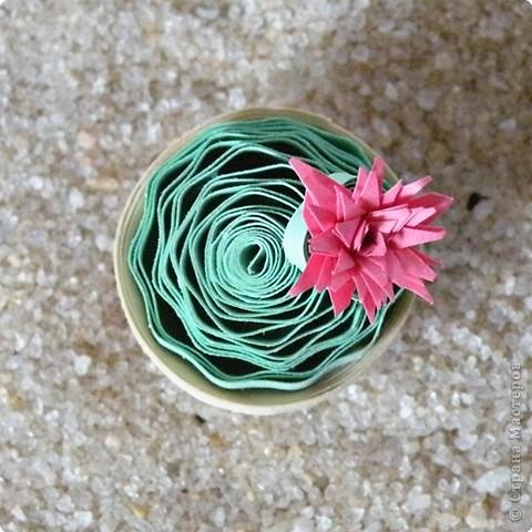 Квиллинг: Коллекция кактусов фото 7