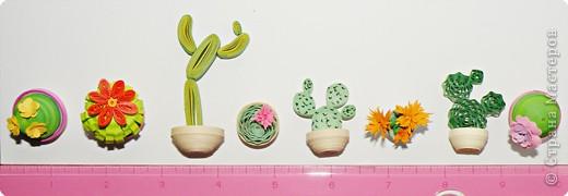 Квиллинг: Коллекция кактусов фото 15